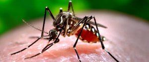CDC Zika Virus Mosquito